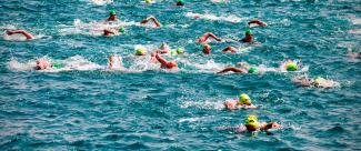 Open water swimmers competing for the first place